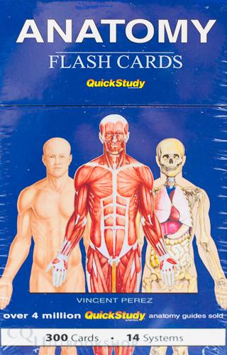 Cquni Bookshop Quickstudy Flash Cards Anatomy